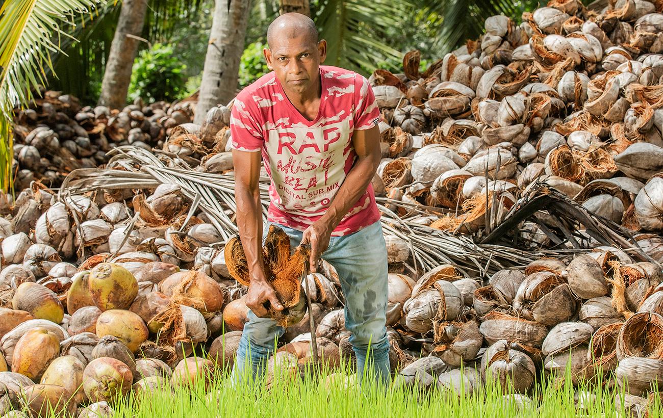 Kokosmilch mit Zitronengras & Ingwer